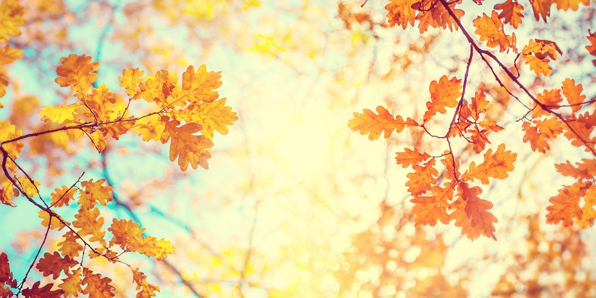 WEBデザイン】秋らしさを感じるデザイン作成 参考になる色・モチーフ ...